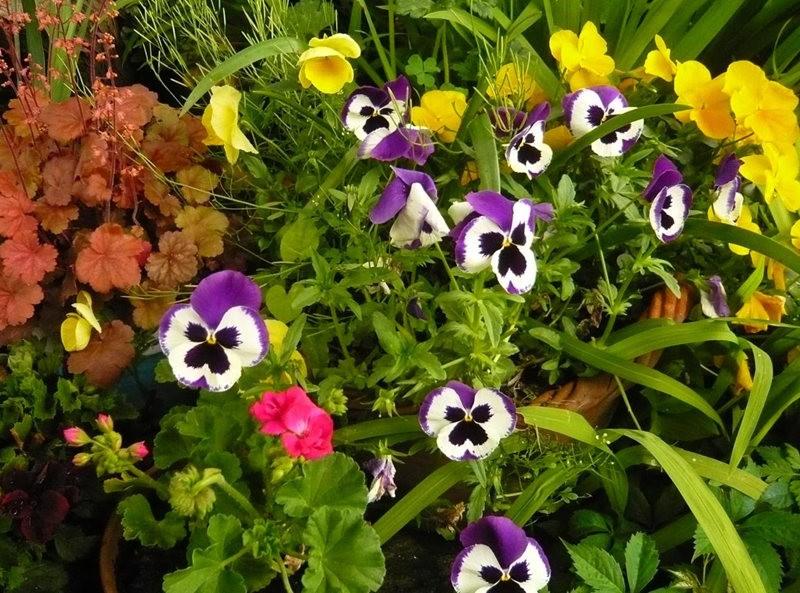 无处不在的鲜花---2_图1-14