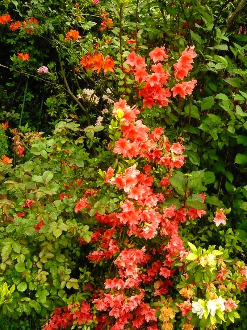 无处不在的鲜花---2_图1-15