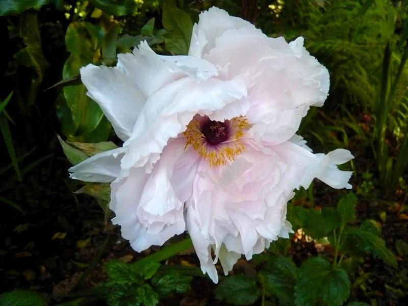 无处不在的鲜花---2_图1-17