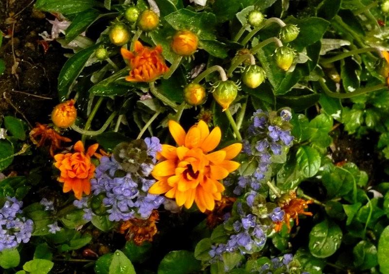 无处不在的鲜花---2_图1-18