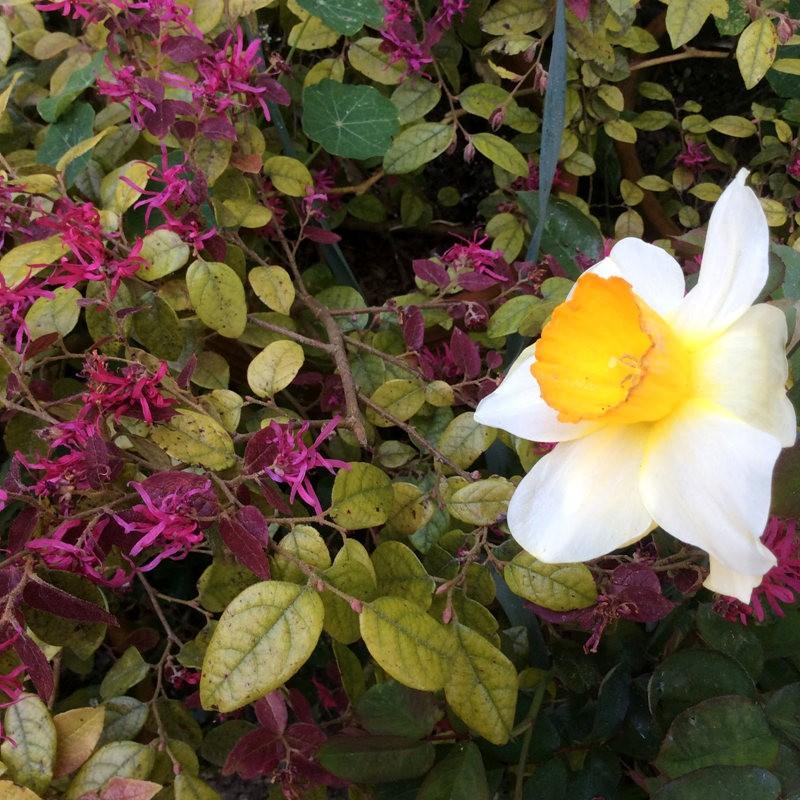 无处不在的鲜花---2_图1-19