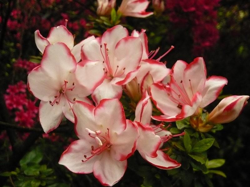 无处不在的鲜花---2_图1-20