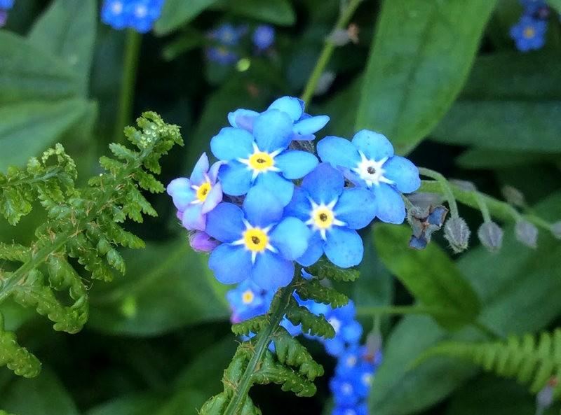无处不在的鲜花---2_图1-21