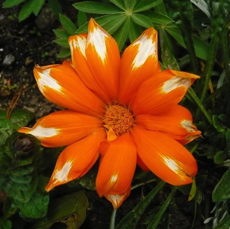无处不在的鲜花---2_图1-22