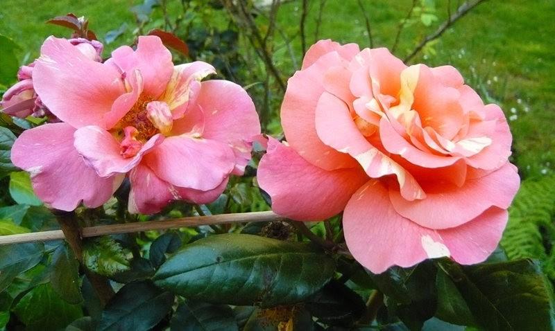 无处不在的鲜花---2_图1-23