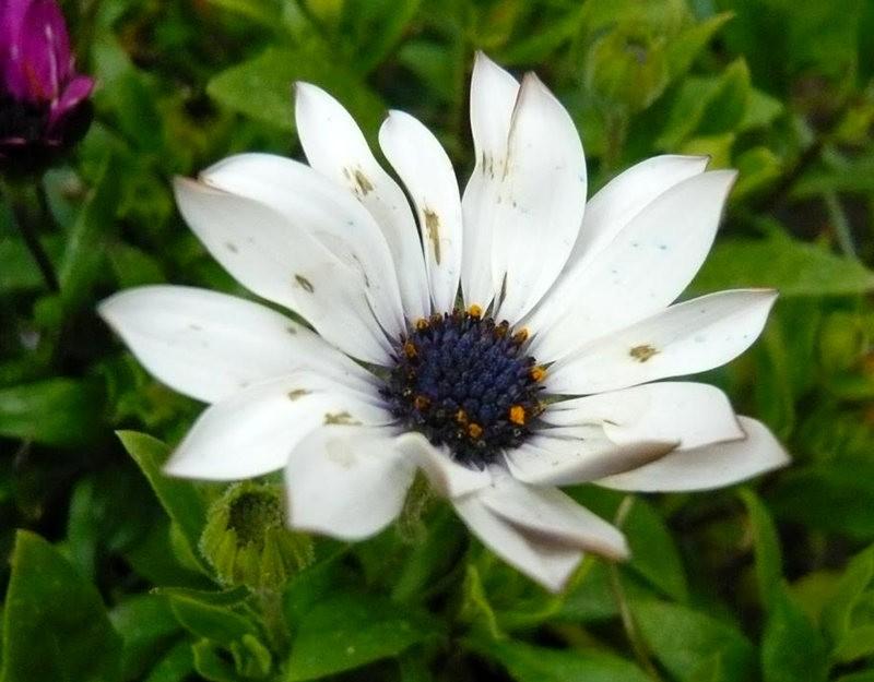 无处不在的鲜花---2_图1-24
