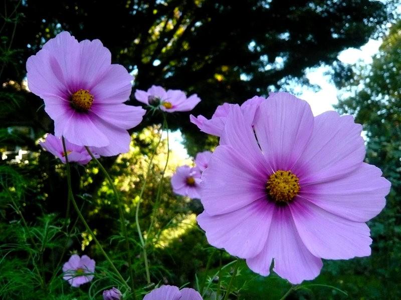 无处不在的鲜花---2_图1-25