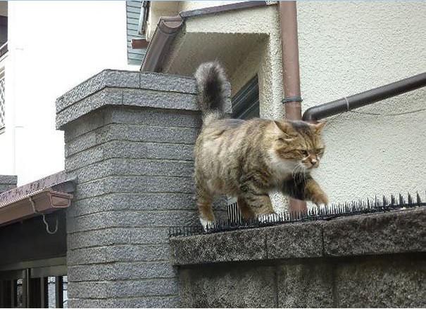 谁说猫是冷血动物?_图1-2