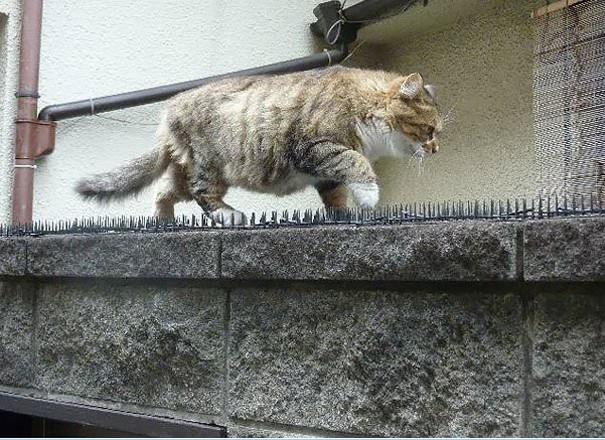 谁说猫是冷血动物?_图1-3