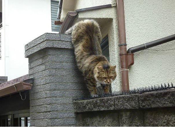 谁说猫是冷血动物?_图1-1