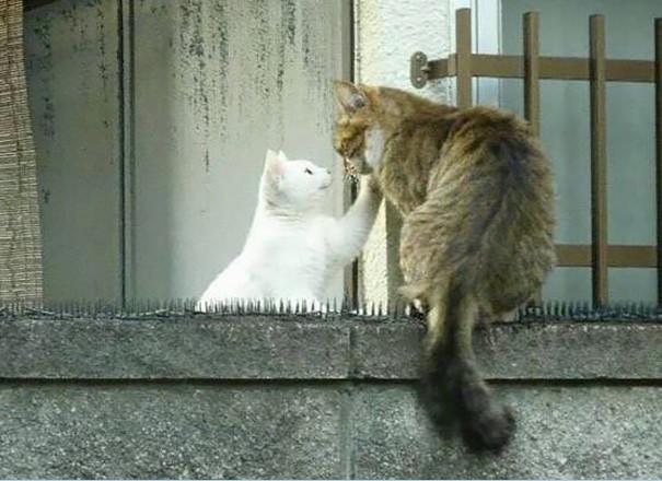 谁说猫是冷血动物?_图1-4