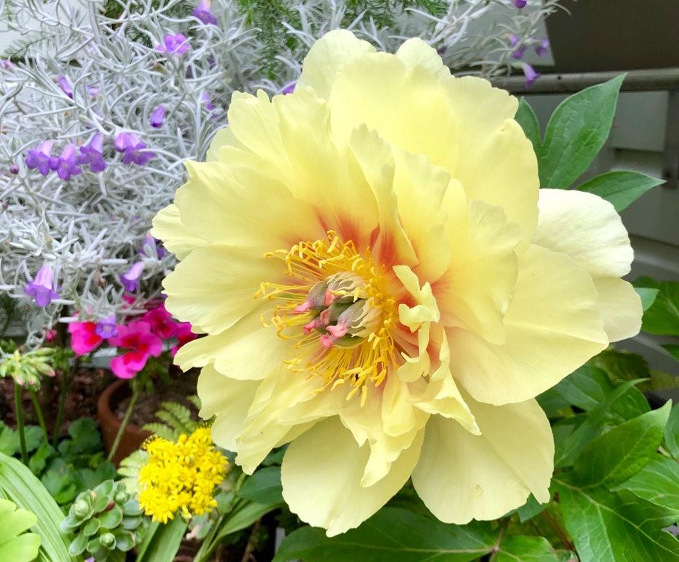 无处不在的鲜花---3_图1-1