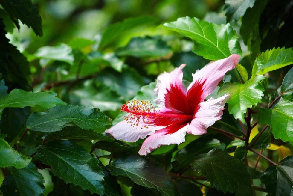 无处不在的鲜花---3_图1-5