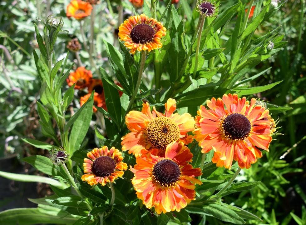 无处不在的鲜花---3_图1-14