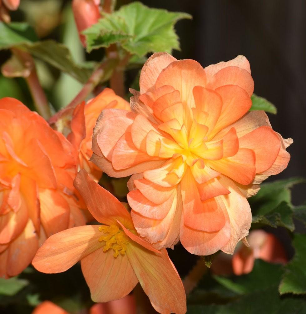 无处不在的鲜花---3_图1-15