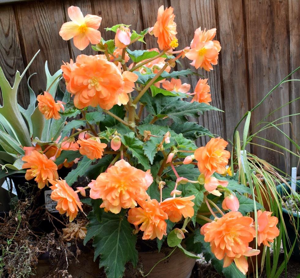无处不在的鲜花---3_图1-16