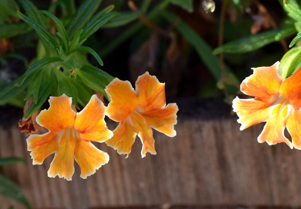 无处不在的鲜花---3_图1-20