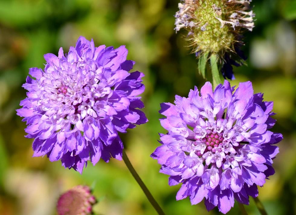 无处不在的鲜花---3_图1-21