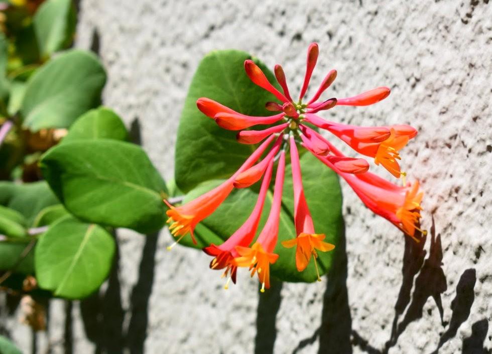 无处不在的鲜花---3_图1-26