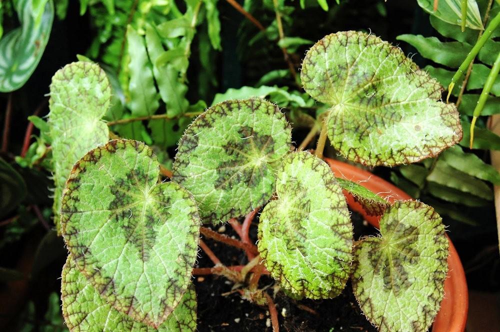 8月绽放的植物_图1-2