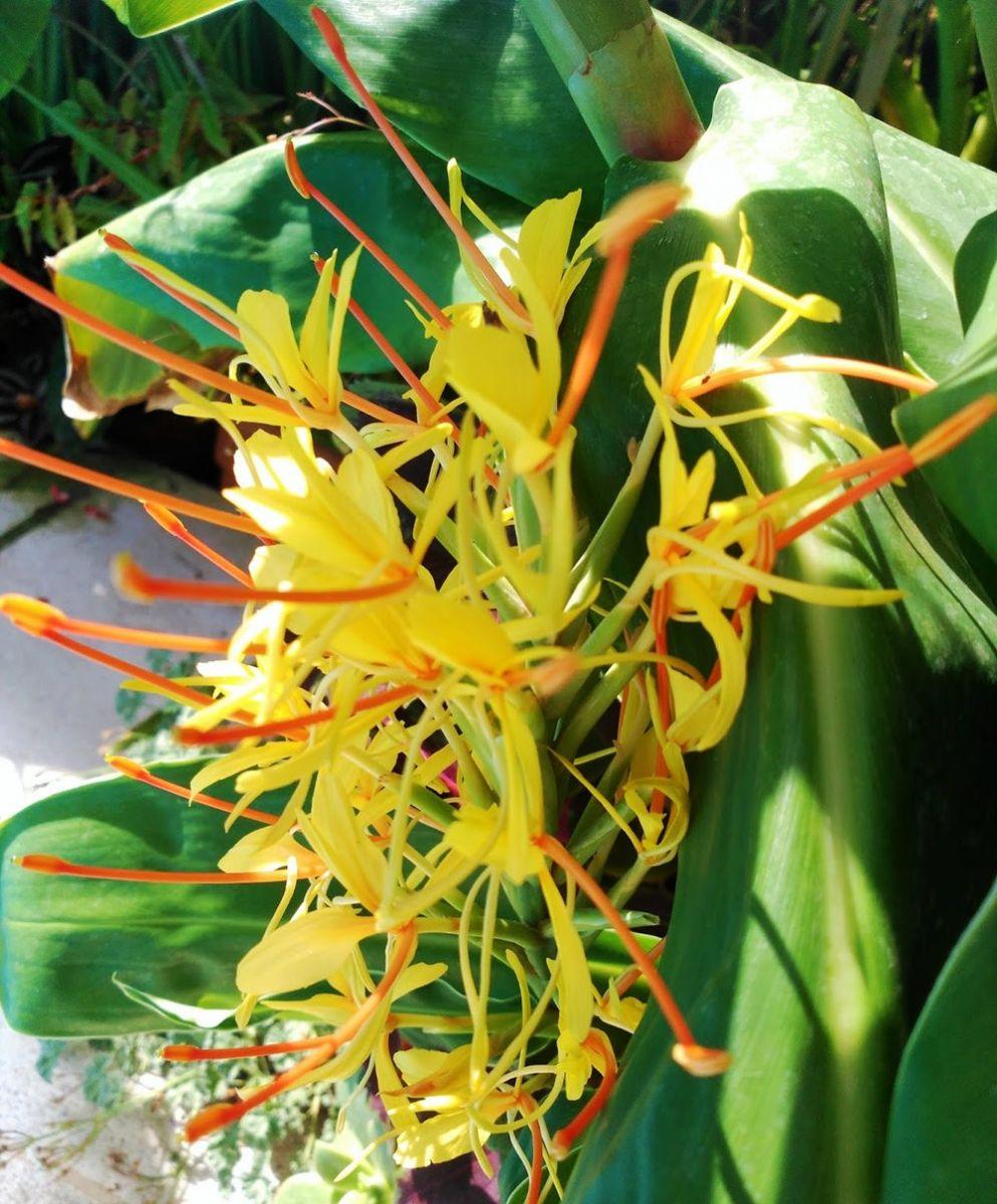8月绽放的植物---2_图1-4
