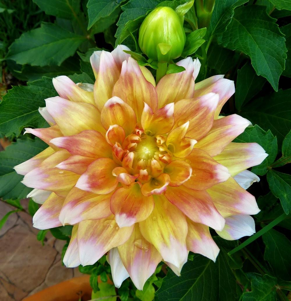 8月绽放的植物---2_图1-5