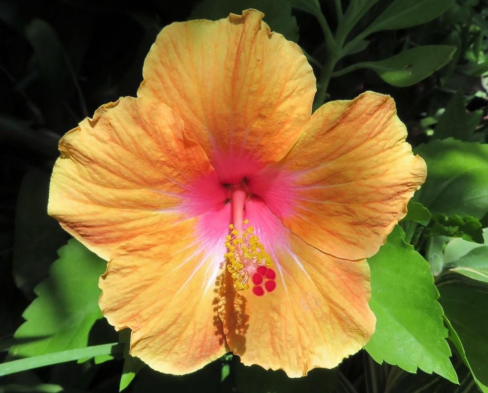 8月绽放的植物---2_图1-11