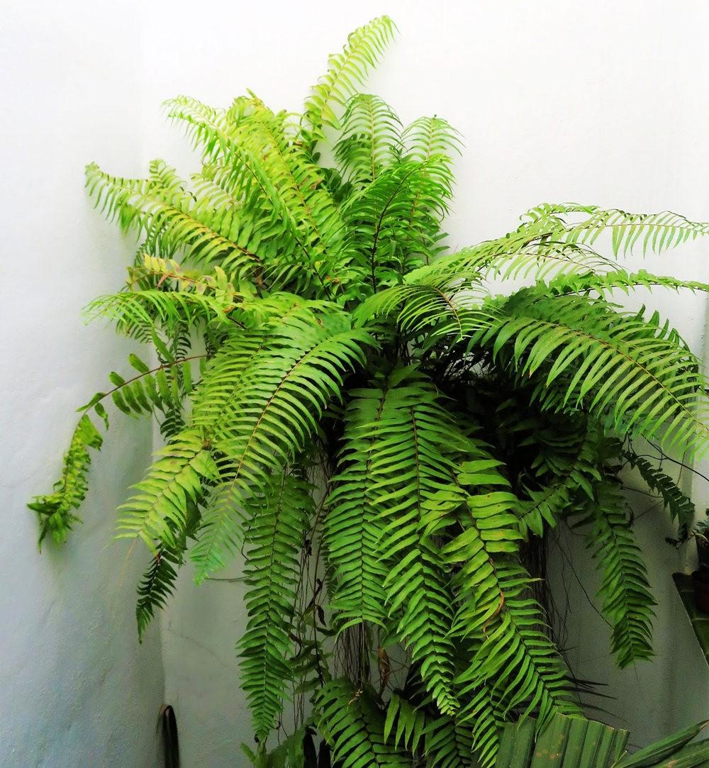 8月绽放的植物---2_图1-15