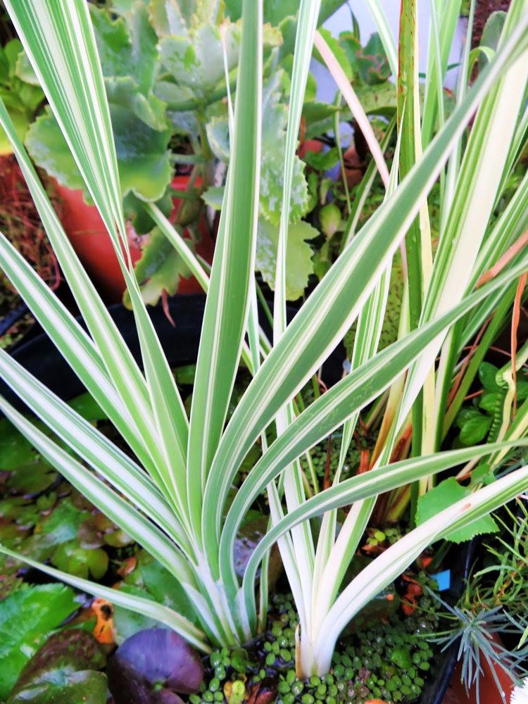 8月绽放的植物---2_图1-17