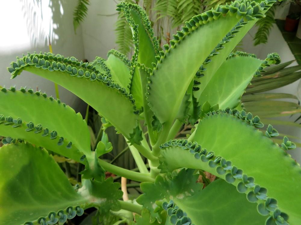8月绽放的植物---2_图1-18