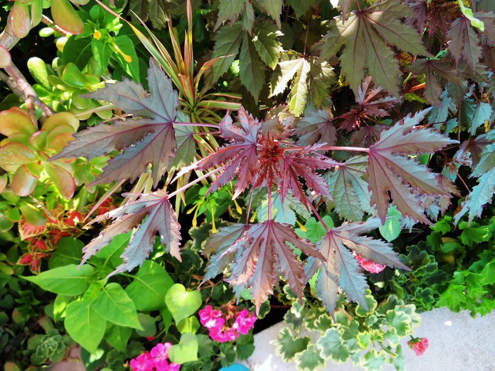8月绽放的植物---2_图1-20