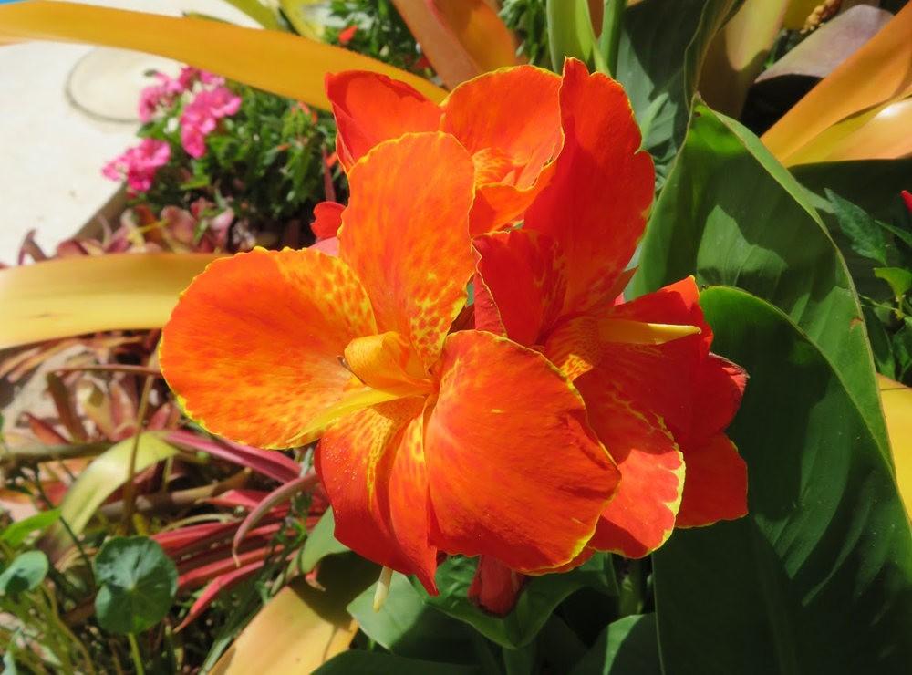 8月绽放的植物---2_图1-21