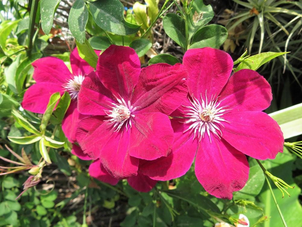 8月绽放的植物---2_图1-24