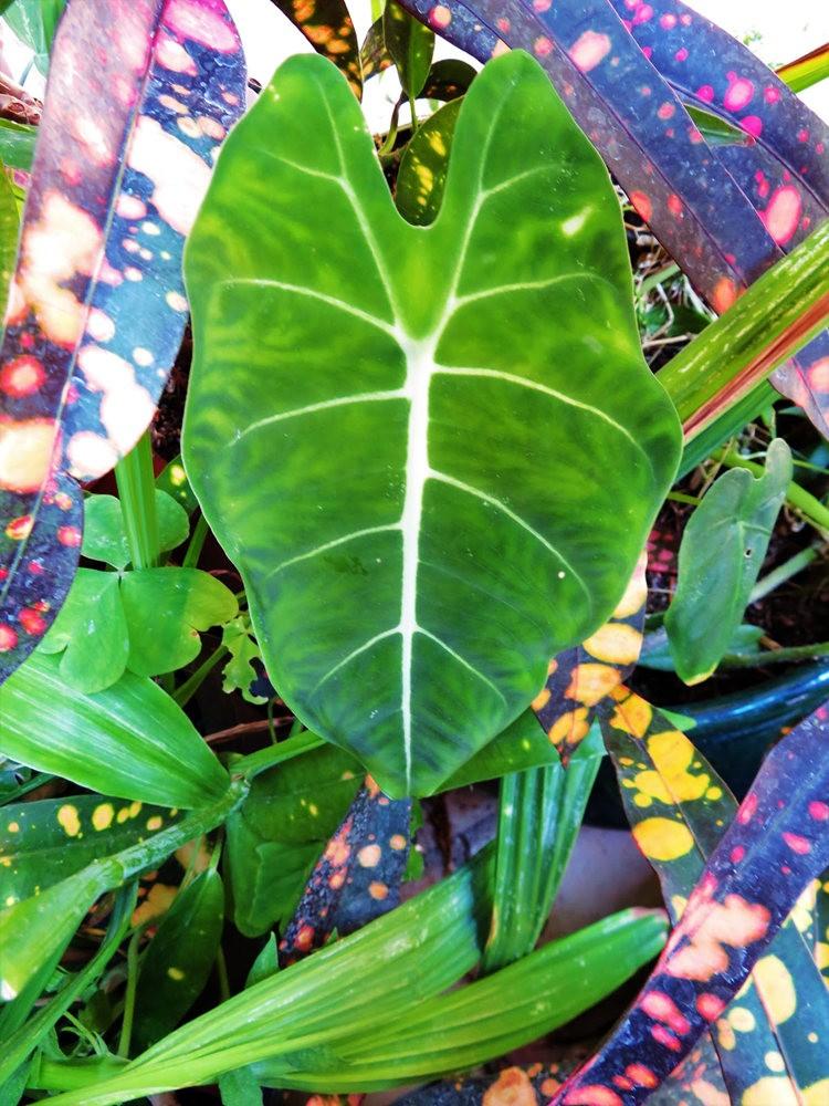 8月绽放的植物---3_图1-3