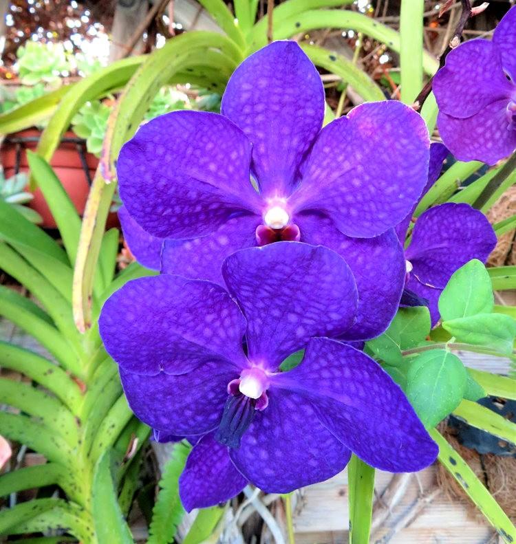 8月绽放的植物---3_图1-4