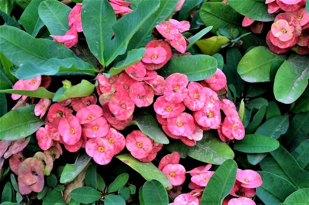 8月绽放的植物---3_图1-6