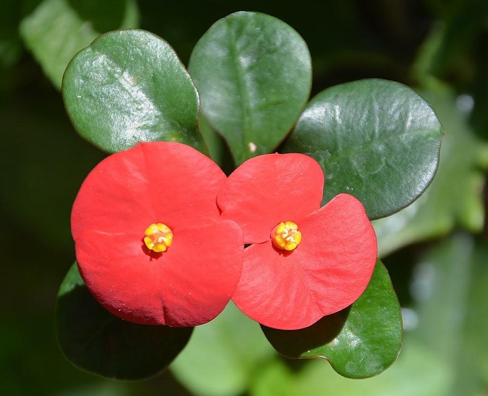 8月绽放的植物---3_图1-8