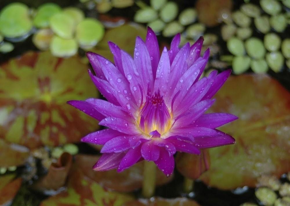 8月绽放的植物---3_图1-12