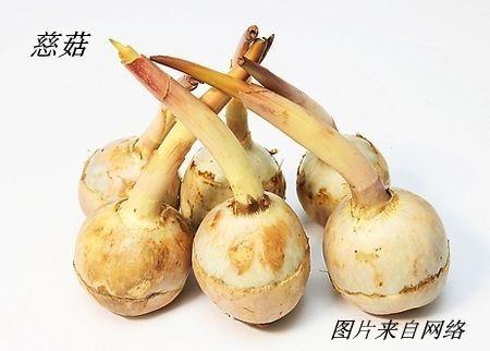 慈姑花开_图1-24