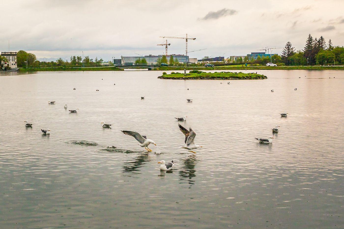 冰岛雷克雅未克(Reykjavík),游城中湖_图1-17