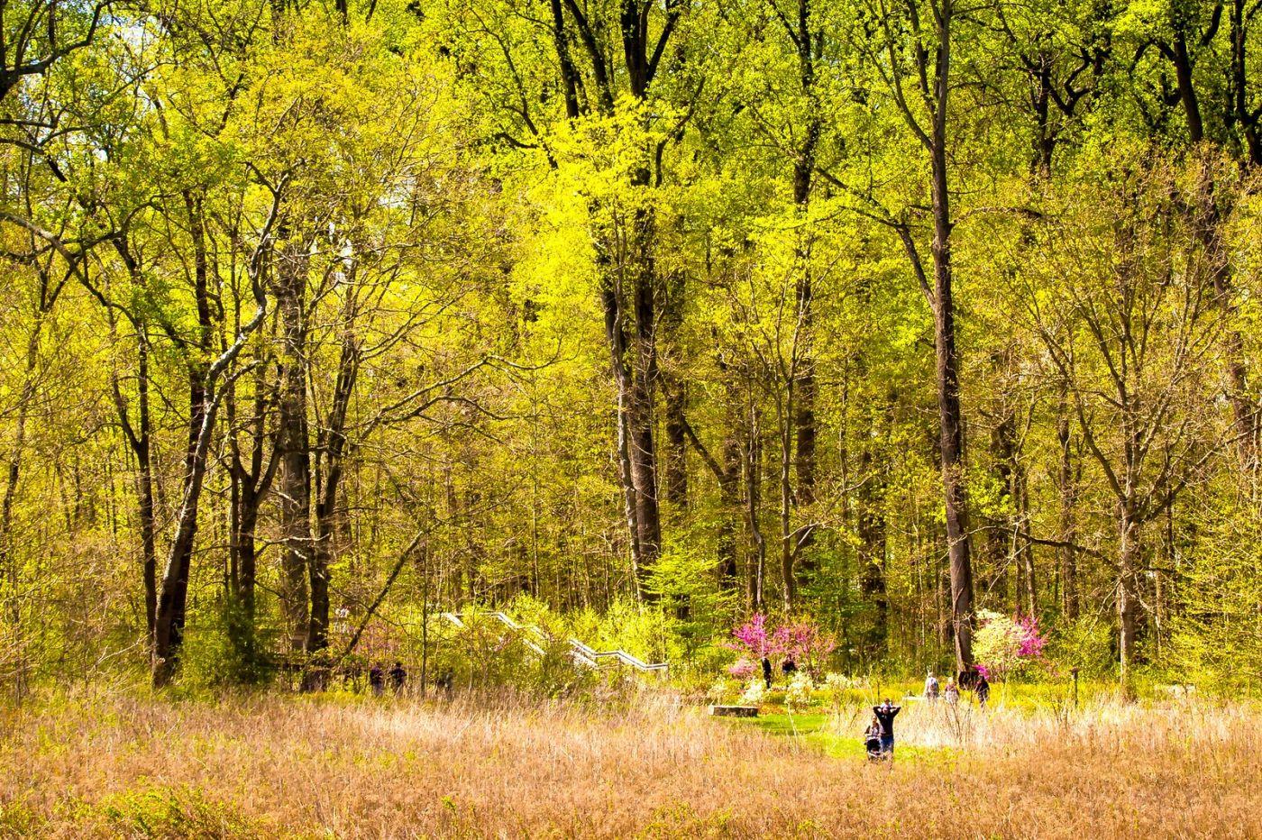 宾州长木公园,定格美好的画面_图1-38