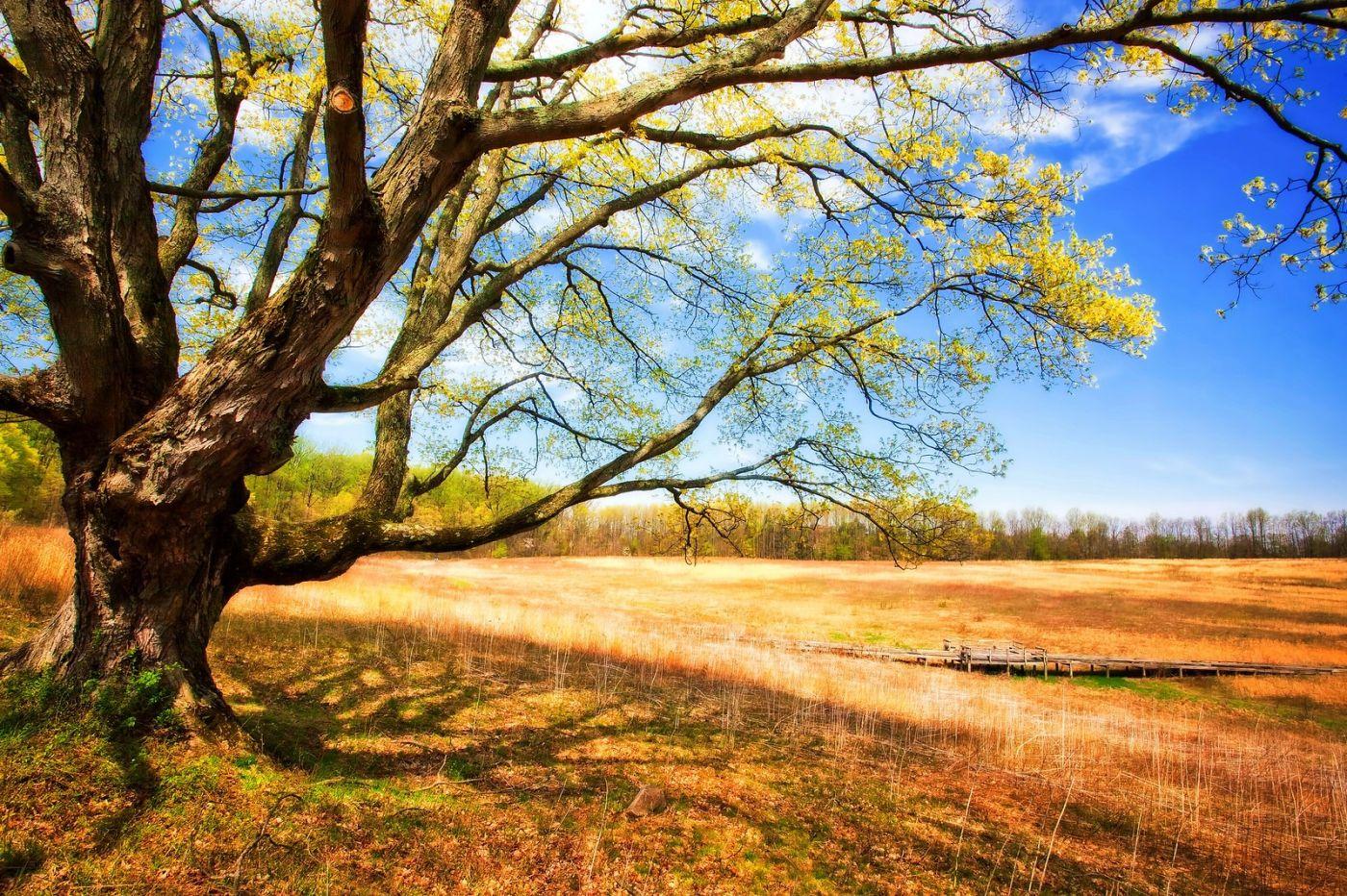 宾州长木公园,定格美好的画面_图1-40