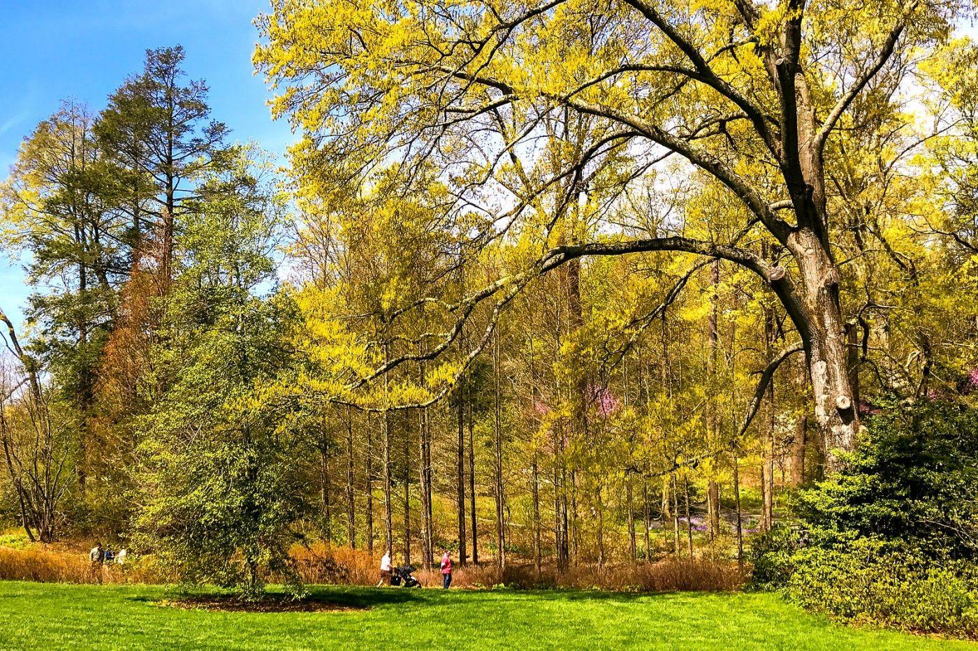 宾州长木公园,定格美好的画面_图1-36