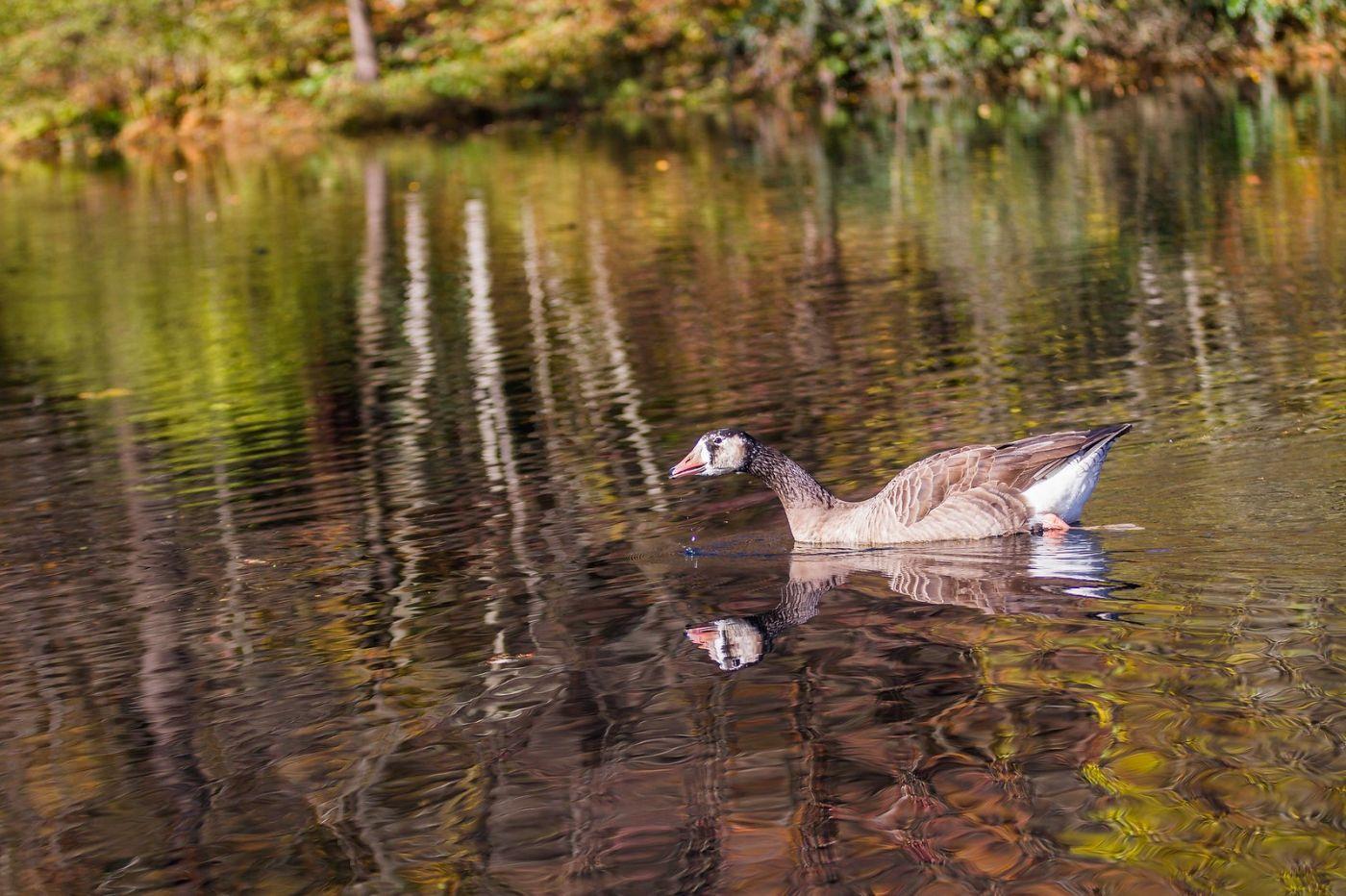 宾州长木公园,定格美好的画面_图1-31