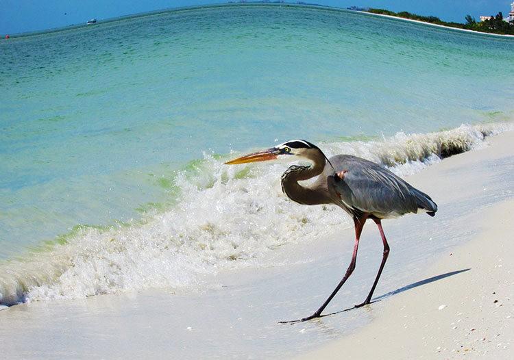 佛罗里达州那不勒斯海滩_图1-6