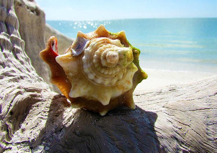 佛罗里达州那不勒斯海滩_图1-8