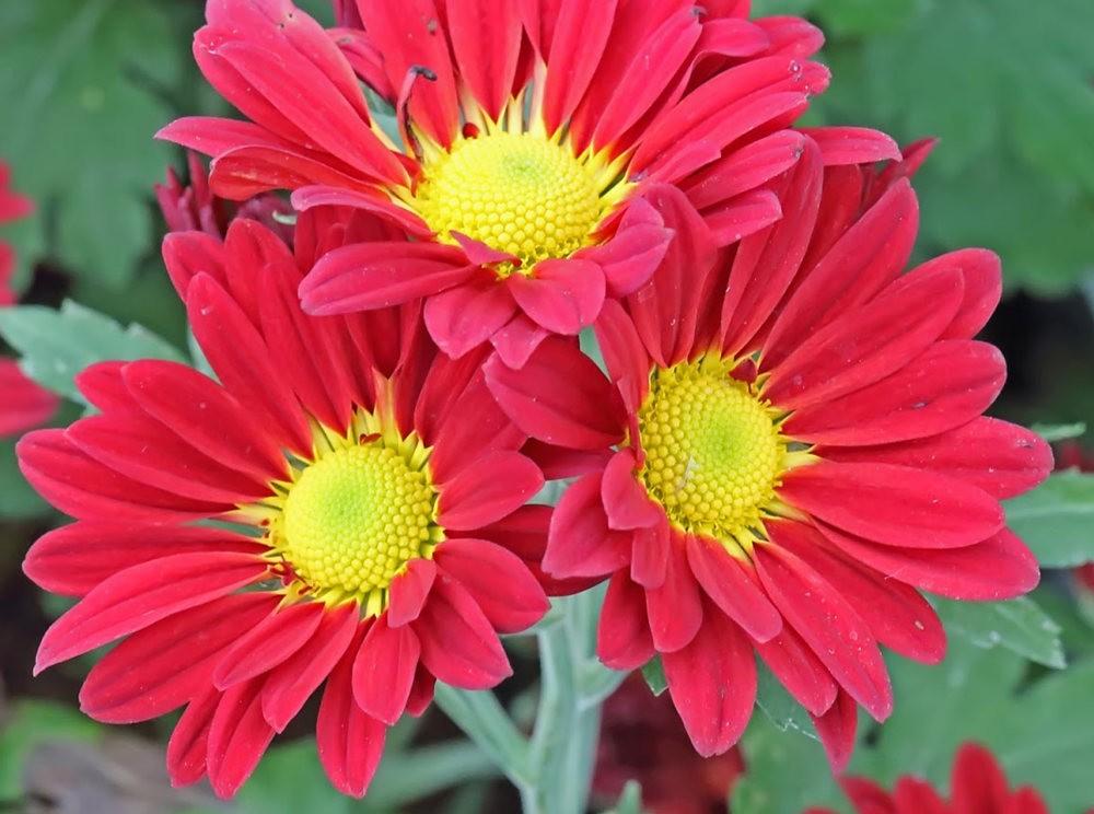 班加罗尔植物园--看花观鸟_图1-1