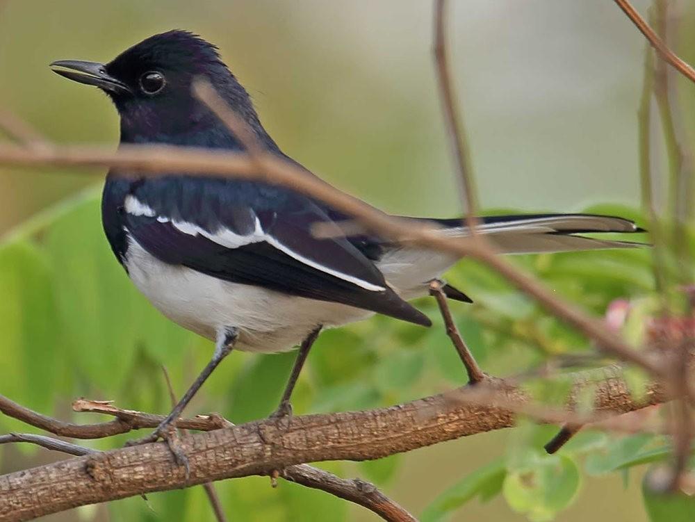 班加罗尔植物园--看花观鸟_图1-2