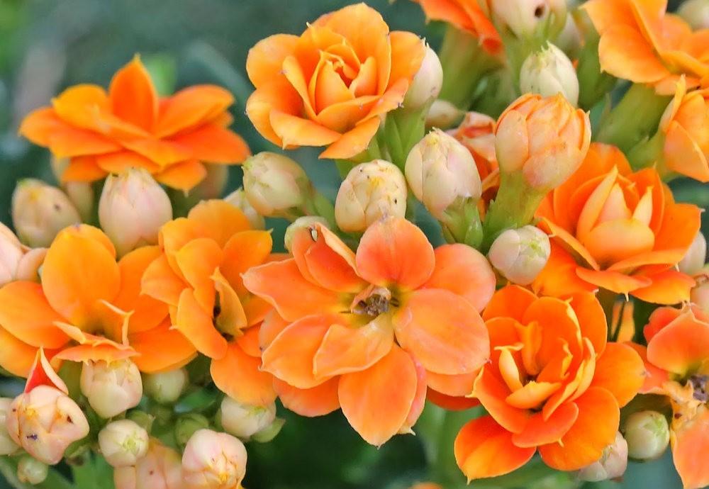 班加罗尔植物园--看花观鸟_图1-3