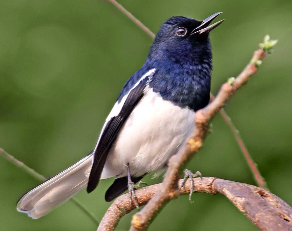 班加罗尔植物园--看花观鸟_图1-4